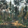 Forest trail, Boat of Garten, Cairngorms